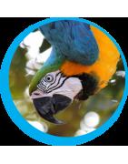Legetøj og tilbehør til papegøjer og fugle