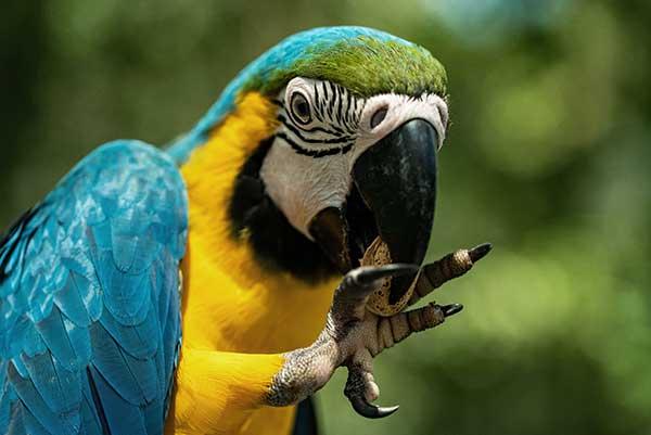 Fouragering til aktivering af din fugl